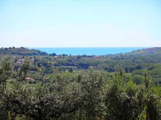 Building land of 5500sqm with sea view and olive grove, 5km to beach1