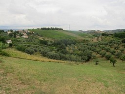 10,000 sqm of mainly olive grove with building rights for a 200sqm Villa.