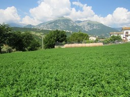 A hectare of crop land on a gentle slope with open and fantastic mountain views. 1