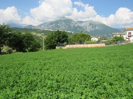 A hectare of crop land on a gentle slope with open and fantastic mountain views.