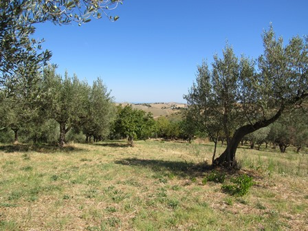 Ruin of 70sqm with 6000sqm of land , mainly olive grove and fruit orchard, with some mountain and some sea view.